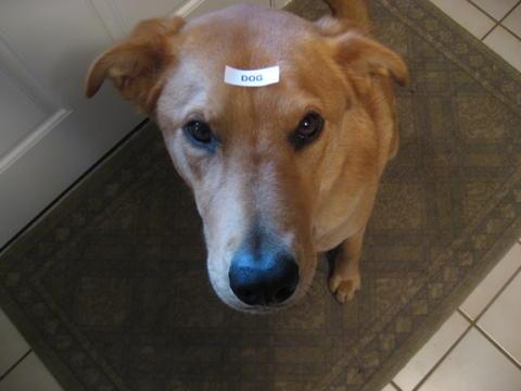 labelmakerdog.jpg