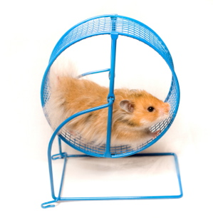 How to Get Off the Hamster Wheel and Get on With Life ...