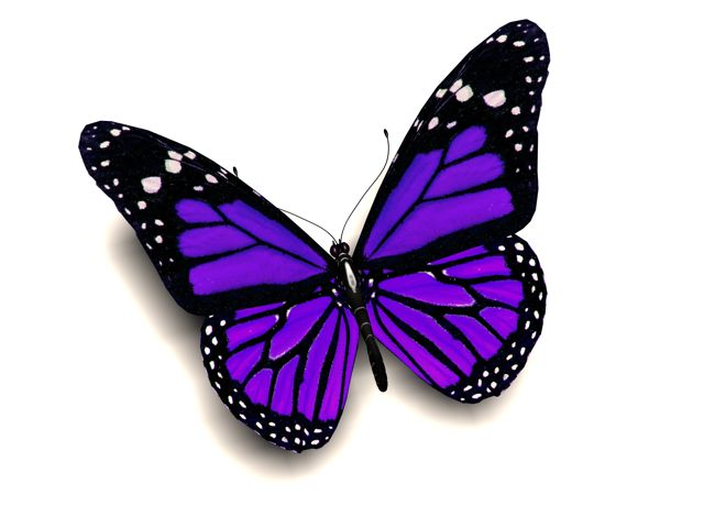 The been there done that guide to reinventing yourself for Purple butterfly tattoo